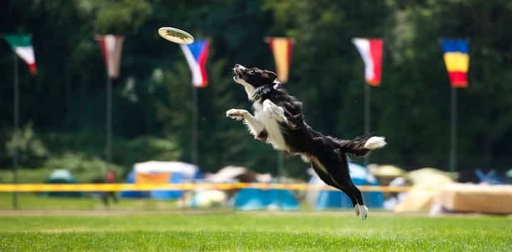 Frisbees for Dogs