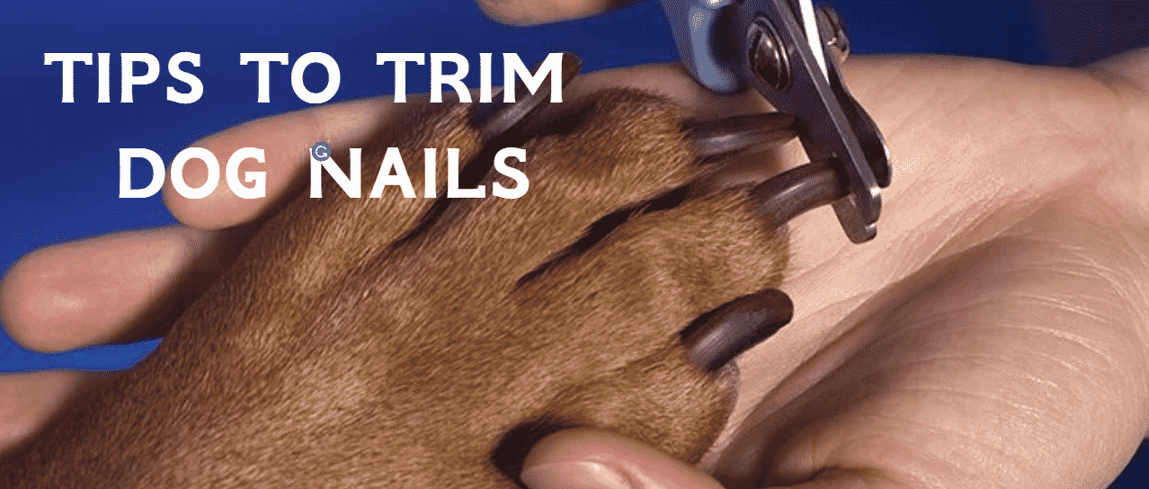 Tips to Trim Dog Nails Correctly